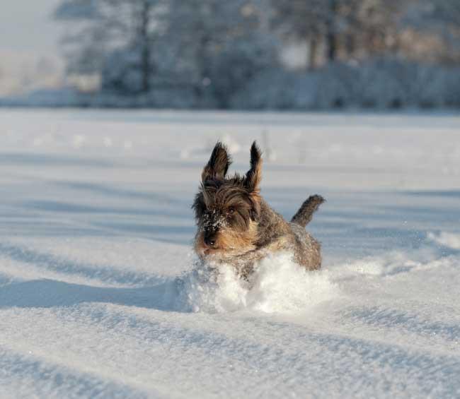 Förbered dig och din hund inför vintern